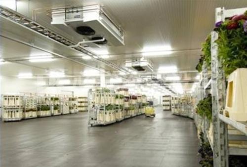 上海蔬菜保鲜冷库厂家